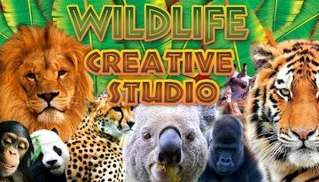 The Wildlife Creative Studio
